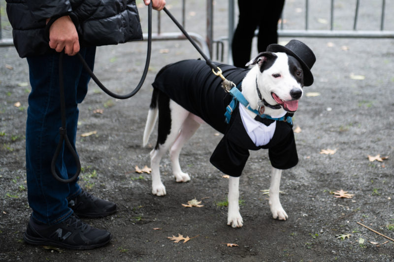dapper-dog-halloween-costume