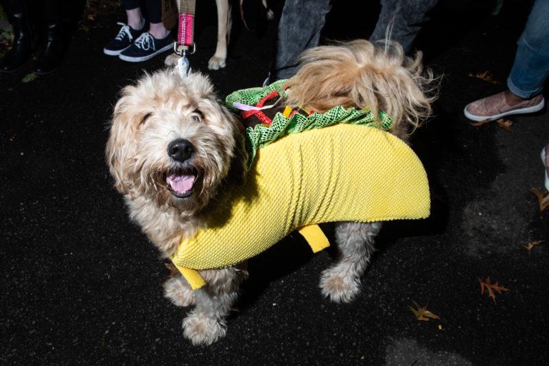 Taco-Dog-Costume