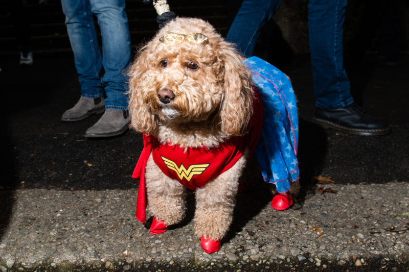 Wonder-Woman-Dog-Costume
