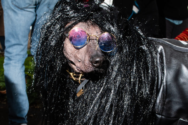 Joey Ramone dog Costume