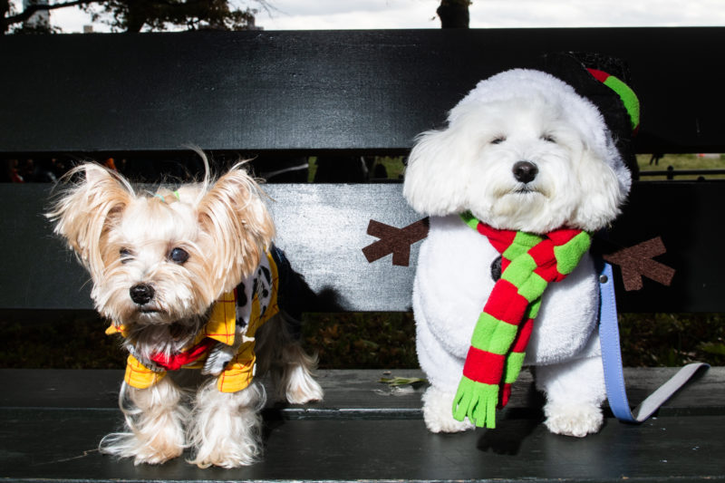 Snowman Dog Costume