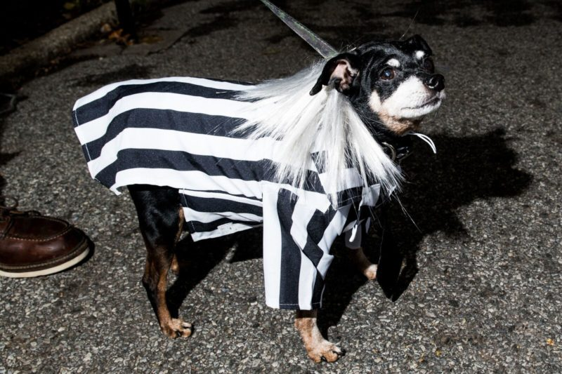 Beetle juice dog costume
