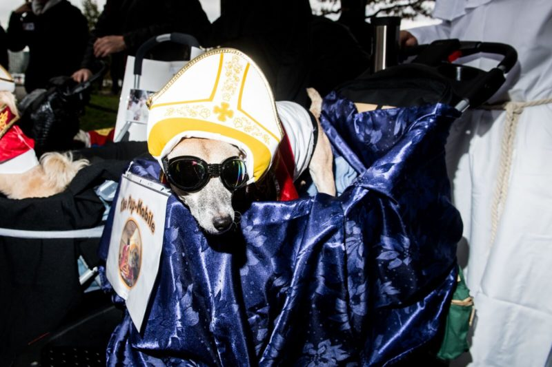 pope-mobile-dog-costume