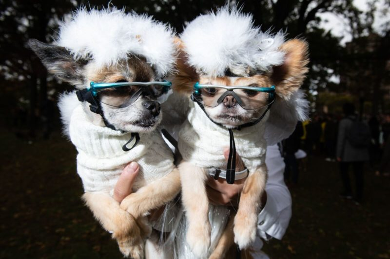 Puff ball dog costumes