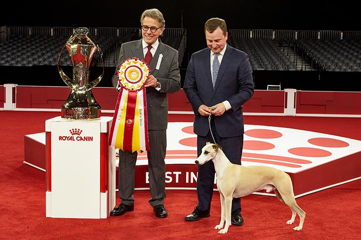 Best in Show and Best Bred By Exhibitor in Show: GCHP CH Pinnacle Tennessee Whiskey (Whiskey), Whippet; 2018 AKC National Championship presented by Royal Canin, Orlando, FL.