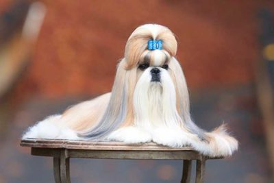 Dog Grooming Tips How To Groom A Dog