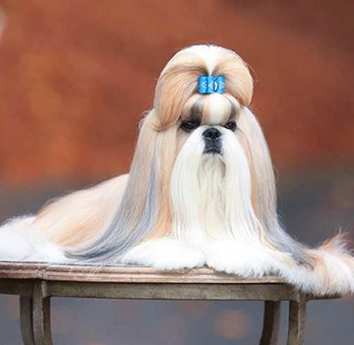 10 Best Dog Grooming Tips From Dog Show Experts and Professional Groomers