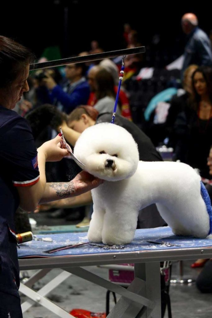 10 Best Dog Grooming Tips From Dog Show Experts And Professional