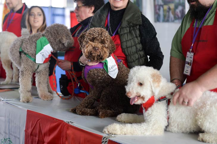 Photos 20 Adorable Dogs At Akc Meet The Breeds In 2020