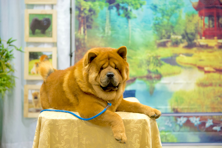 What To Ask At An Akc Meet The Breeds Booth American