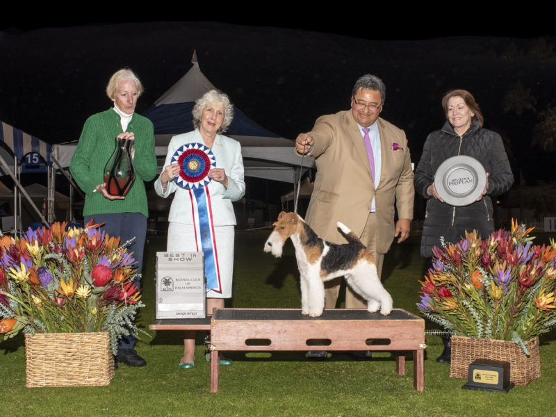Best In Show 2019 Winners of Best in Show at 2019 Palm Springs Dog Show