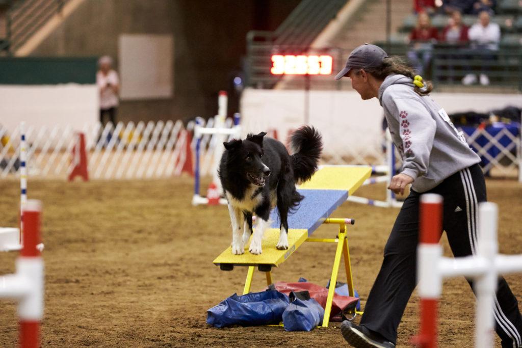 Dog Agility 101: How Do Dog Agility Competitions Work?