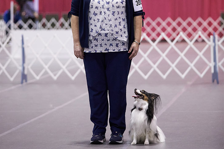 Dog Obedience Competition 101 How Obedience Works