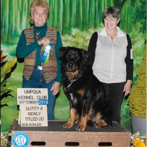 Competition and Title Updates Winter 2019 – American Kennel Club