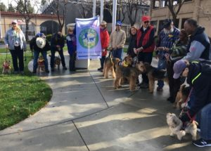 The American Kennel Club Announces 'AKC Fit Dog' Clubs