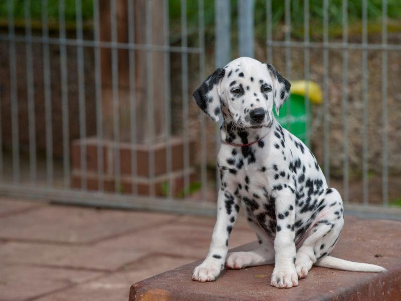 Designing Dog Kennels With Behavior And Welfare