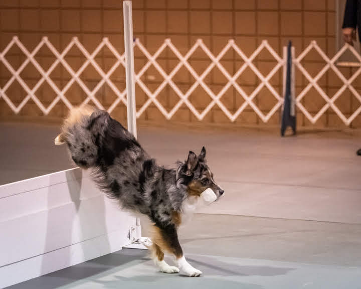 2019 National Obedience Championship Group Winners – American Kennel Club