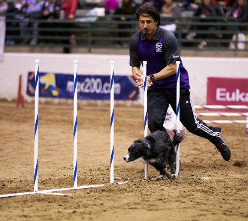 AKC Agility Premier Cup Features Three