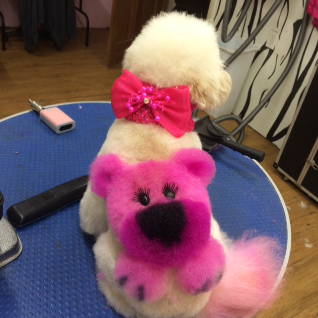 creative grooming pink dog