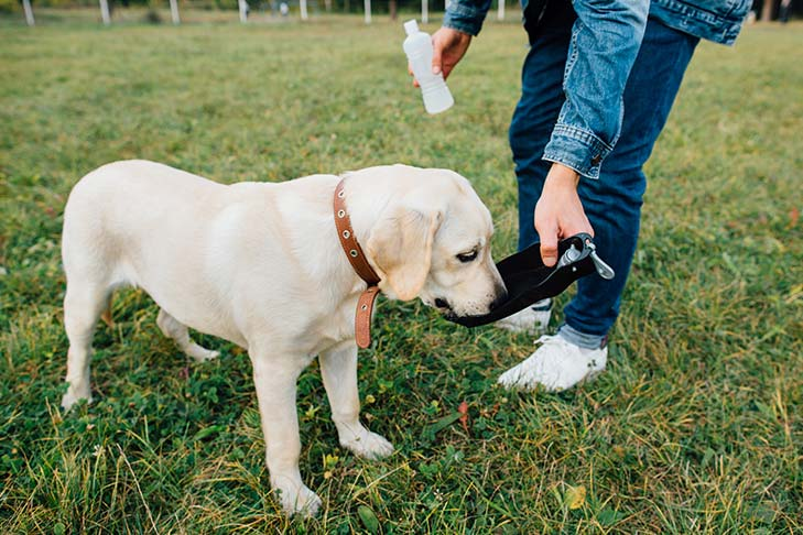 Warning Signs of Dehydration in Dogs – American Kennel Club