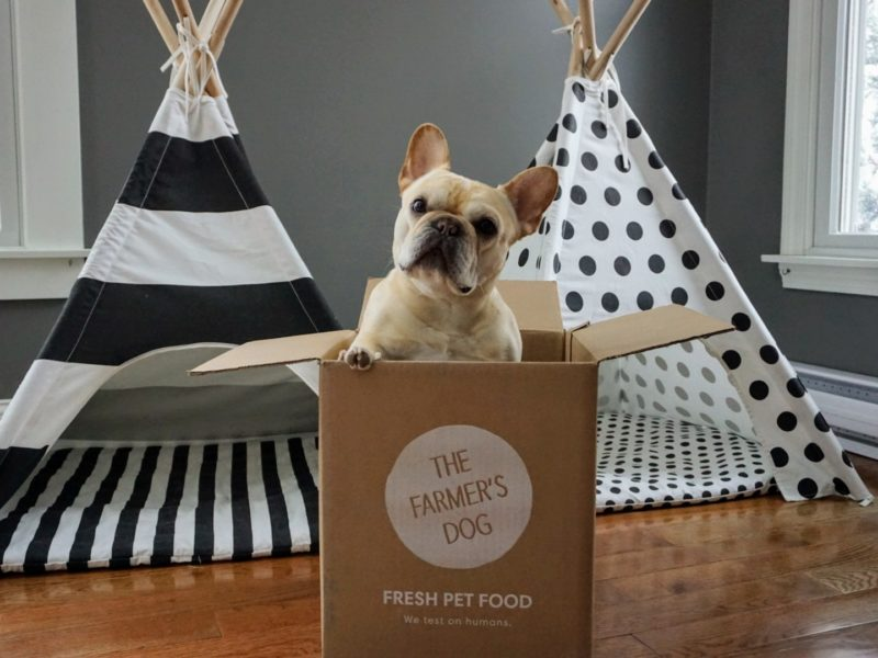 home diet for dogs with liver disease