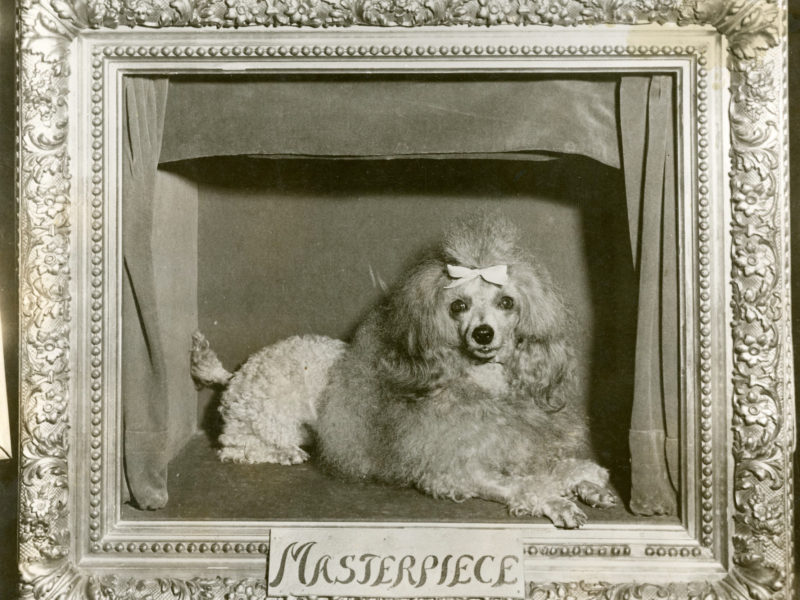 The Disappearance Of Masterpiece The Poodle Part 1