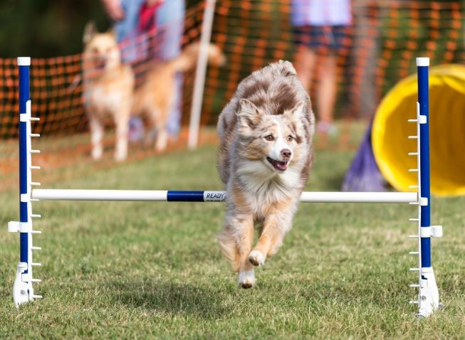 ESPN Dog Day on August 24 Is Nonstop Dog Sports and Entertainment – American Kennel Club