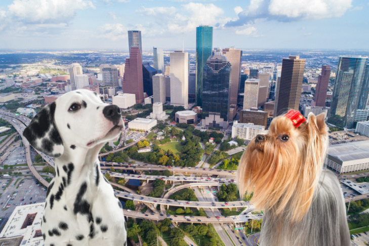Things To Do In Houston >> What To Do With Your Dog In Houston Dog Friendly