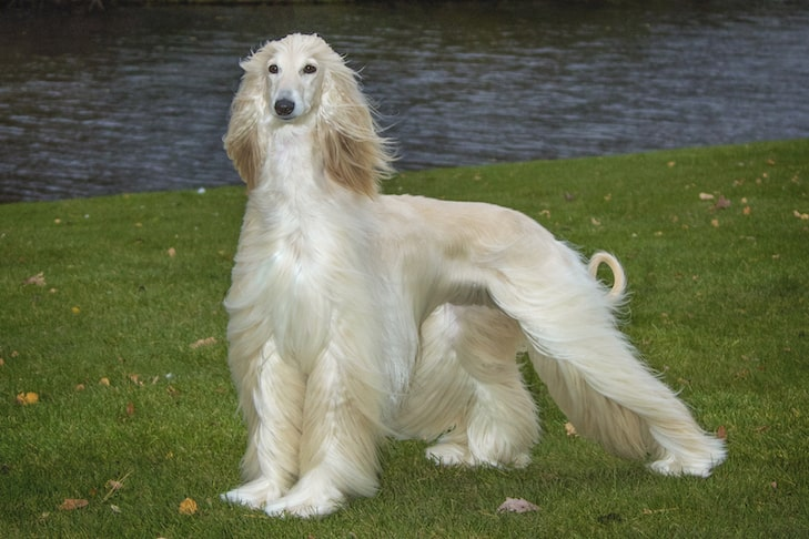 Dogs That Are Hypoallergenic Best Breeds For Allergies From Dogs