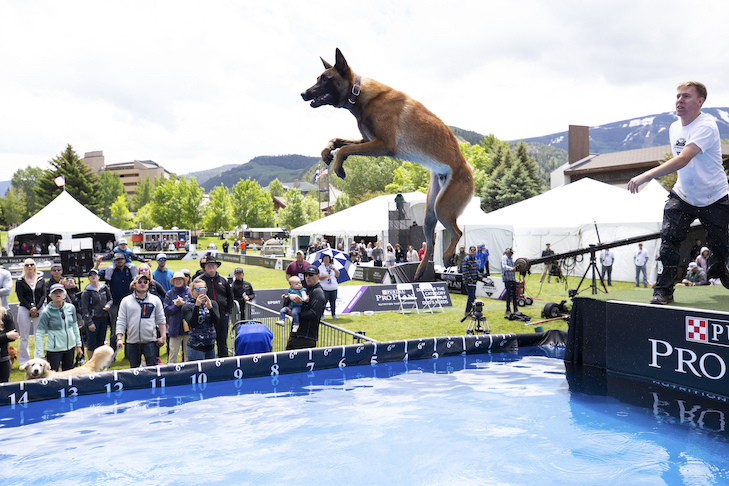 How to Watch the 2019 Purina Pro Plan Incredible Dog Challenge