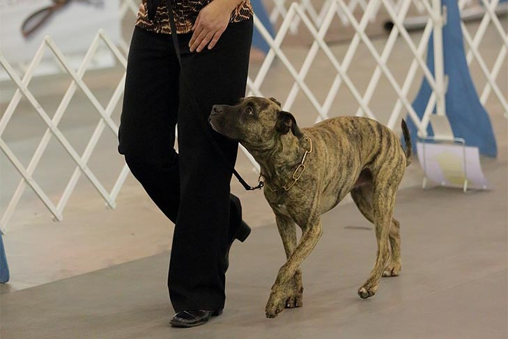 AKC Canine Partners — How to Enroll a Mixed Breed