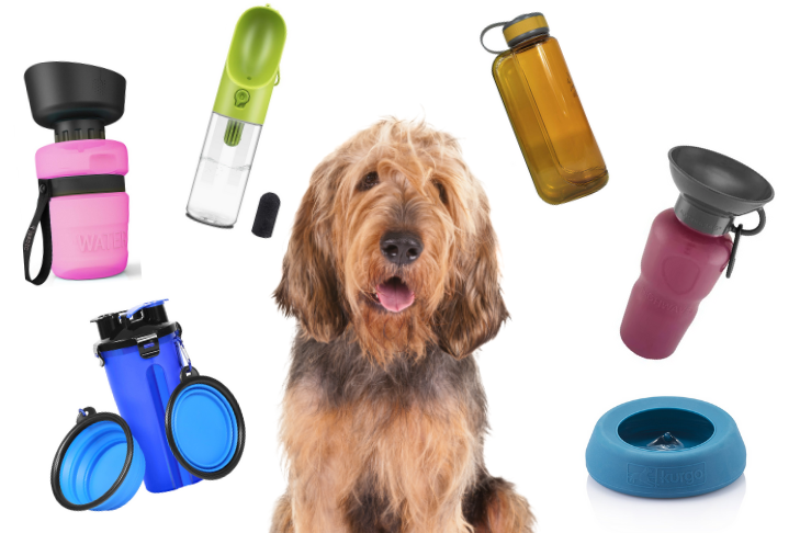 Best Dog Bowls and Water Bottles For Travel – American Kennel Club