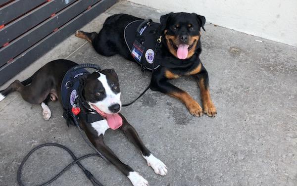 Crisis Response Canines Bring Comfort to El Paso & Dayton