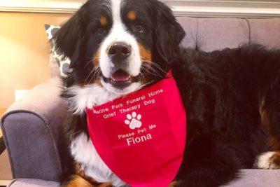 Basic Dog Training: Obedience Commands & Dog Training 101
