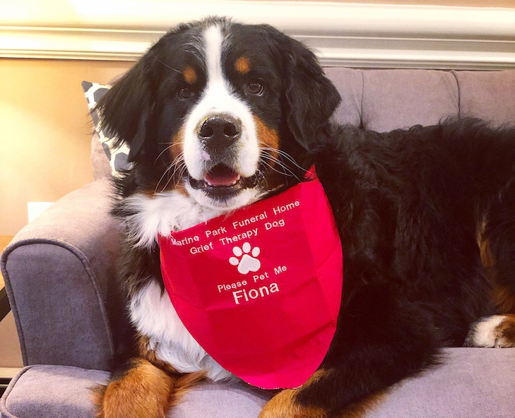 The Millionth Akc Canine Good Citizen Dog Fiona
