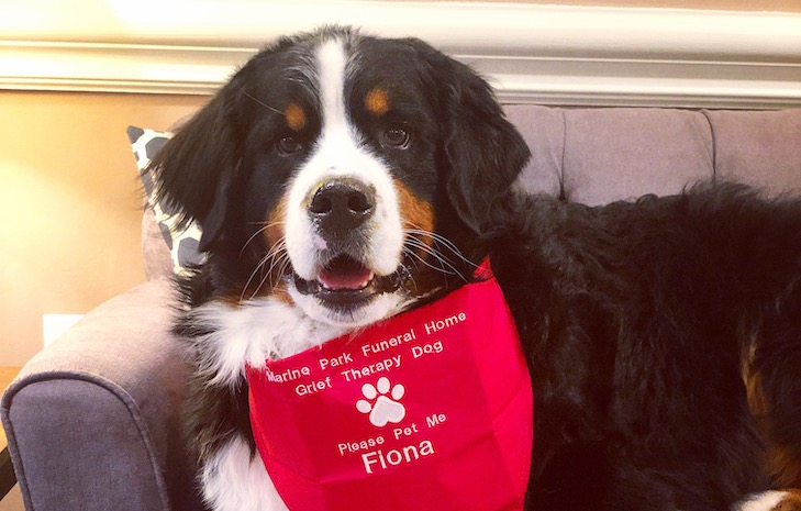The Millionth AKC Canine Good Citizen Dog, Fiona