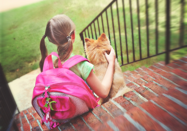 Preparing your Dog for Back-to-School Time – American Kennel Club
