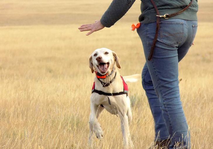 Working Dogs for Conservation May Be The Key to a Greener World