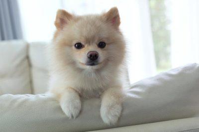 Dog Training: How to Train a Dog & Dog Obedience Training