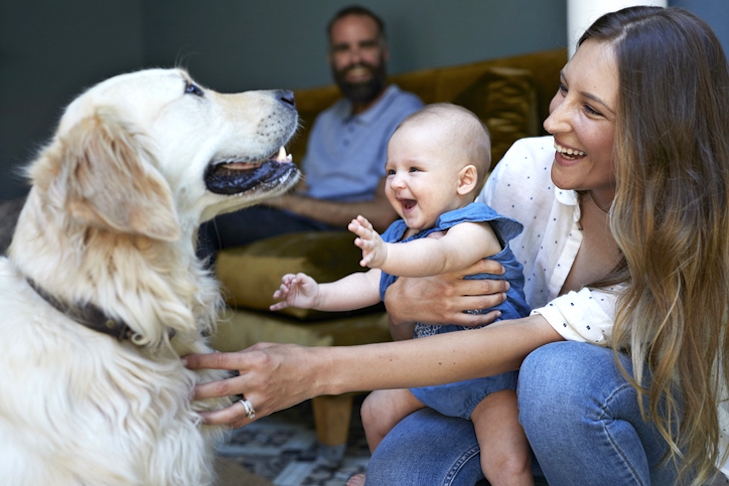 American Kennel Club Expert Guide introducing a dog to the family home