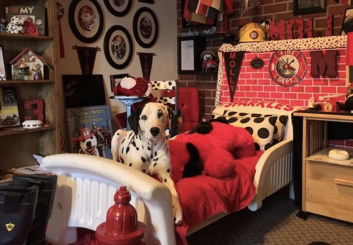 History Of Dalmatians As Fire Dogs How The Breed Became Fire Icons