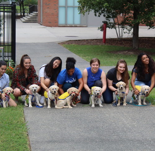 "Duke University's ""Puppy Kindergarten"" Examines Service Dog Nature Vs. Nurture"
