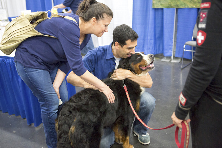 Meet The Breeds The Dog Worlds Answer To Speed Dating