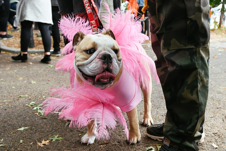 The 29th Annual Tompkins Square Halloween Dog Parade