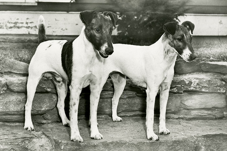 Breeds By Year Recognized American Kennel Club