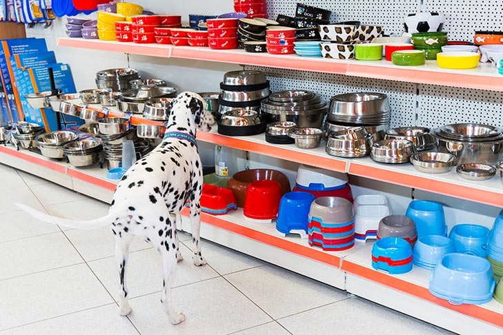 Dalmatian picking out a new bowl.