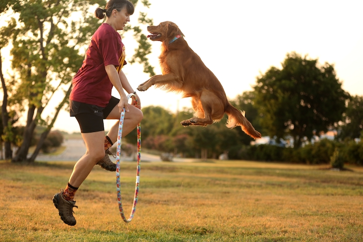 """Golden Retriever """"Gryff"""" Wins First AKC National Trick Dog Competition"""
