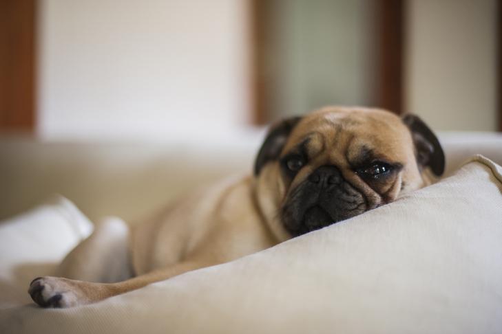 Как определить больного щенка