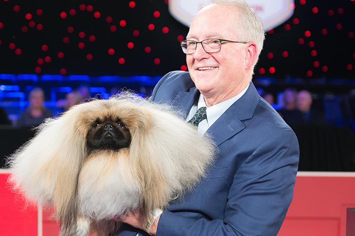2019 Best in Show GCH CH Pequest Wasabi (Wasabi), Pekingese, handled by David Fitzpatrick; Best in Show presentation at the 2019 AKC National Championship presented by Royal Canin, Orlando, FL.
