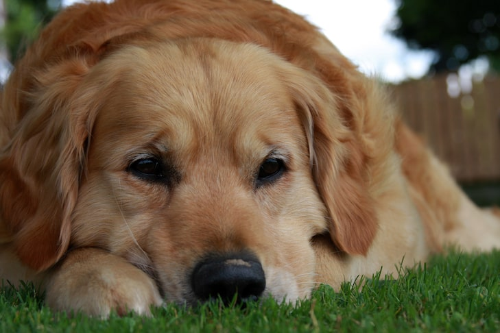 Bowel Obstruction In Dogs Symptoms Treatment And Prevention Tips
